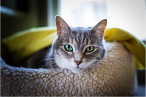 Peanut big green eyes-small