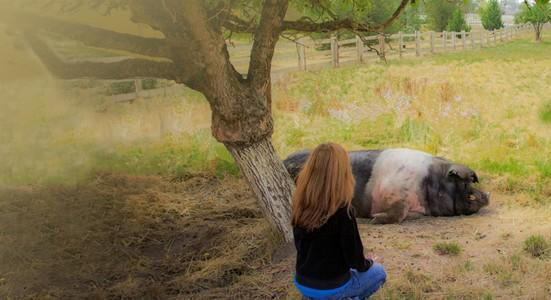 Harley sharing Reiki with Animal Reiki Teacher Kathleen Prasad, Animal Reiki Source