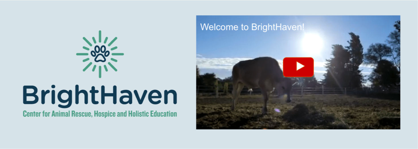 Welcome to BrightHaven Video