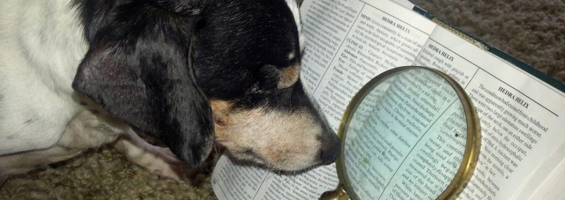 Lily reading 2