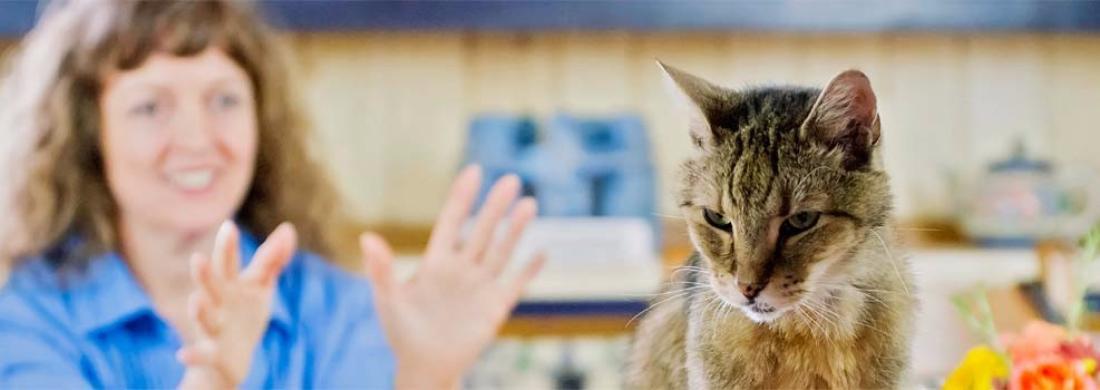 Cat receiving reiki