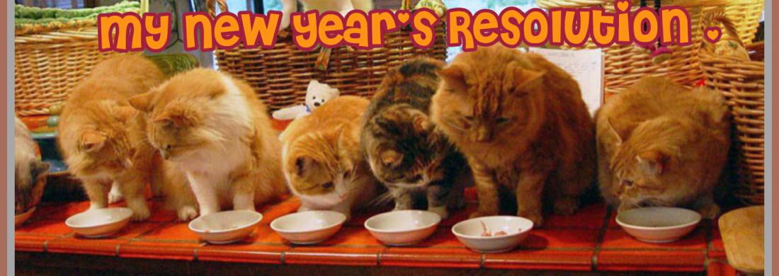 row of cats resolution
