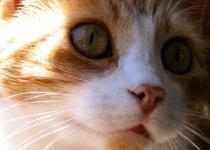 johnnie_angel_kitty