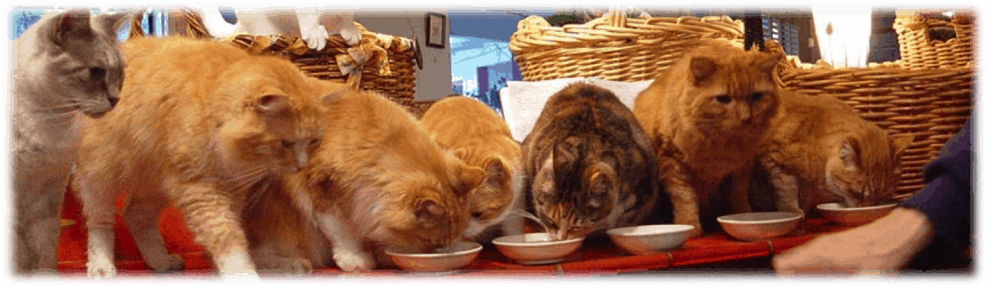 row_of_cats_eating