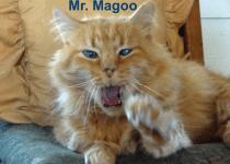 Mr. Magoo the cat