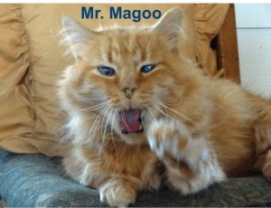 Mr. Magoo the cat
