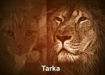 Tarka_051616_blog_feature