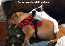 Beauregard cuddling Joey-BLOG