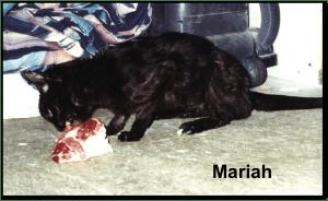 Mariah_meat