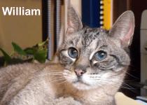 william-name