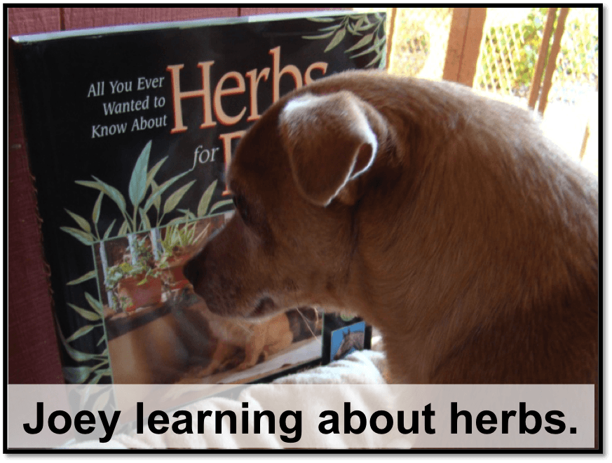 Joey studying herbs
