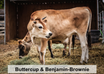 Buttercup and Benjamin-Brownie-names