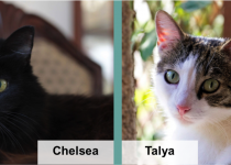 chelsea talya blog feature image v2