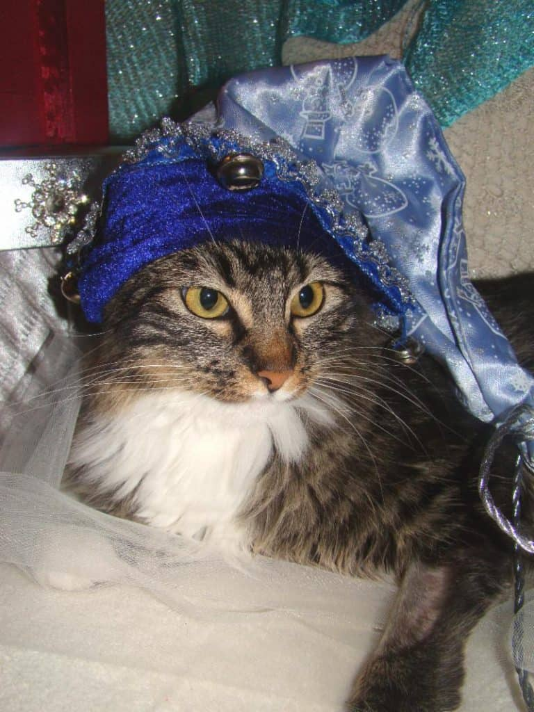 Gem in fancy blue hat