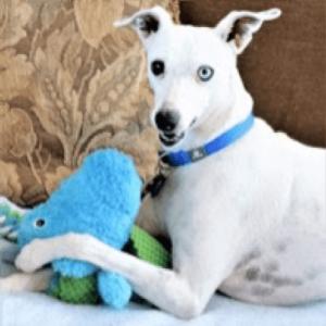 Ziggy the dog 1-Blanca Walker-cropped