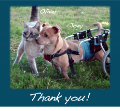 Cat with dog in wheelchair