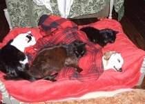 Barney, Beau, Charlie keeping company for Ollie