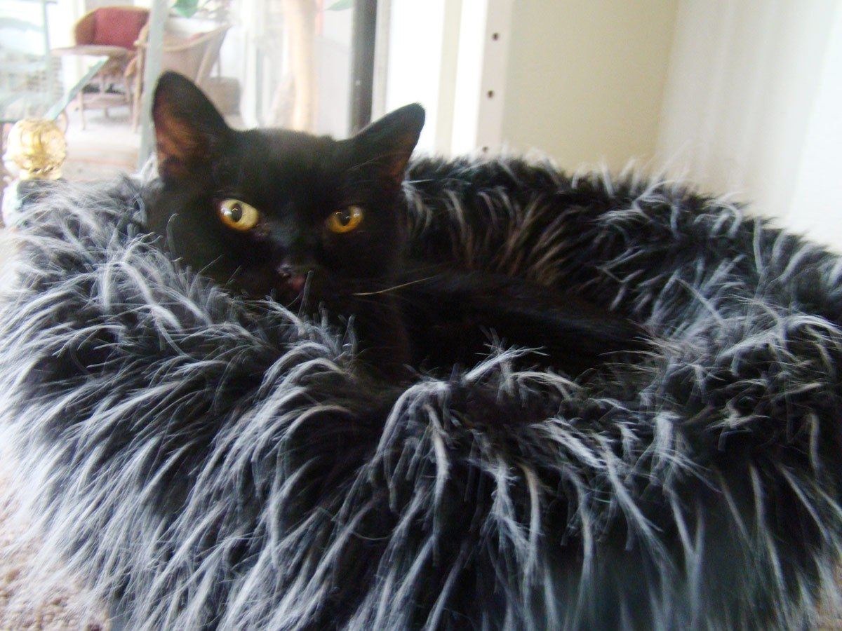 Panther in fabulous bed!