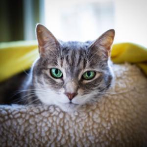 Peanut big green eyes-cropped