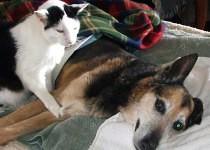 Beau comforting Patti