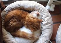 Furbee and Trevor Sleeping