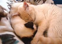 Furbee and Dafne-Ann Cuddling