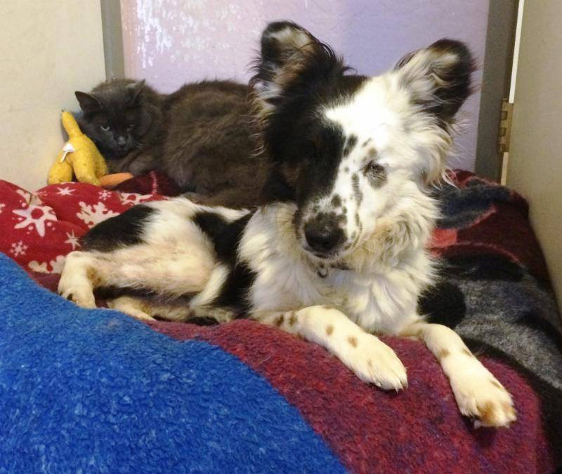 black and white dog with cat