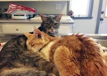 Molly and Rosie Cuddling