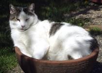 Neil in the garden pot