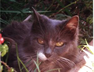 cindi_cat