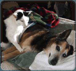 beauregard and patti dying