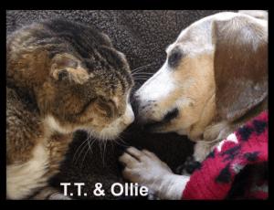 TT_ollie_framed