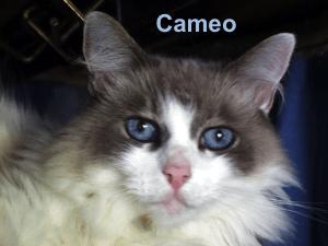 cameo-blog