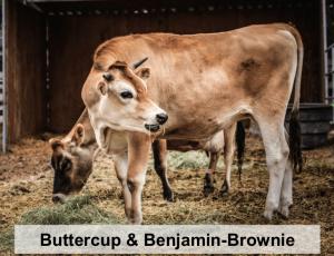 Buttercup and Benjamin-Brownie-names