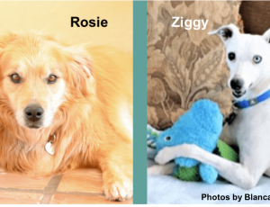 Rosie & Ziggy-blog-Blanca Walker-5