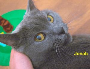 Jonah-blog
