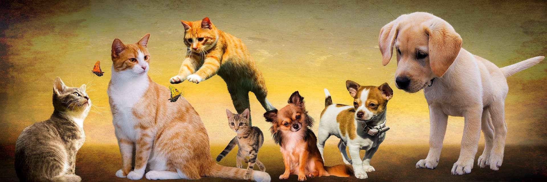 animals-banner-1920