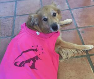 dog pink t-shirt logo