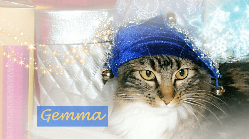 cat in blue jingle bell cap