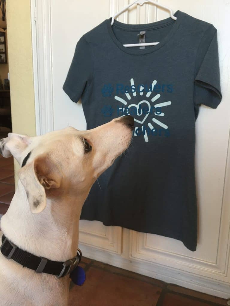 dog looking at shirt